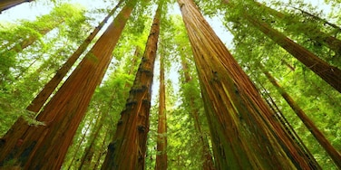 Redwood Shores, Redwood City, Kalifornien, USA