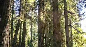 Jedediah Smith Redwoodsin valtion puisto