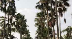 حديقة بوجور بوتانيكال