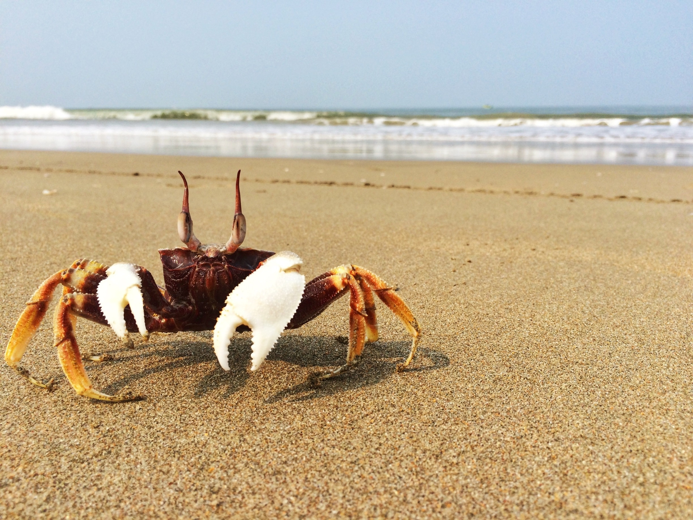 Cansaulim, Goa, India