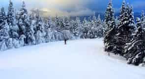 Wildcat Mountain Ski Area