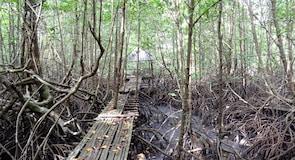ศูนย์อนุรักษ์สัตว์ป่า Peam Krasaop