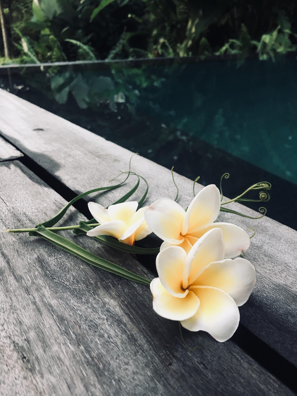 Kayu Putih, Sukasada, Bali, Indonesia