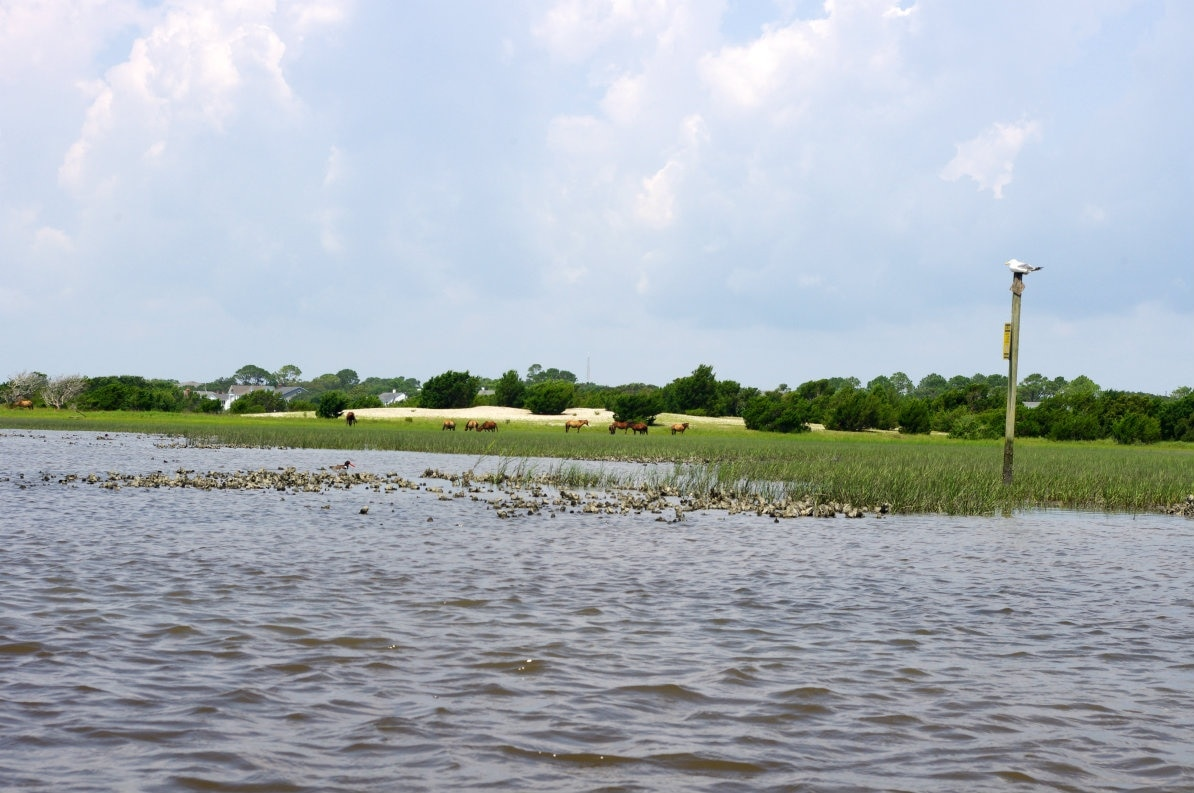 Rachel Carson Reserve, North Carolina, United States of America