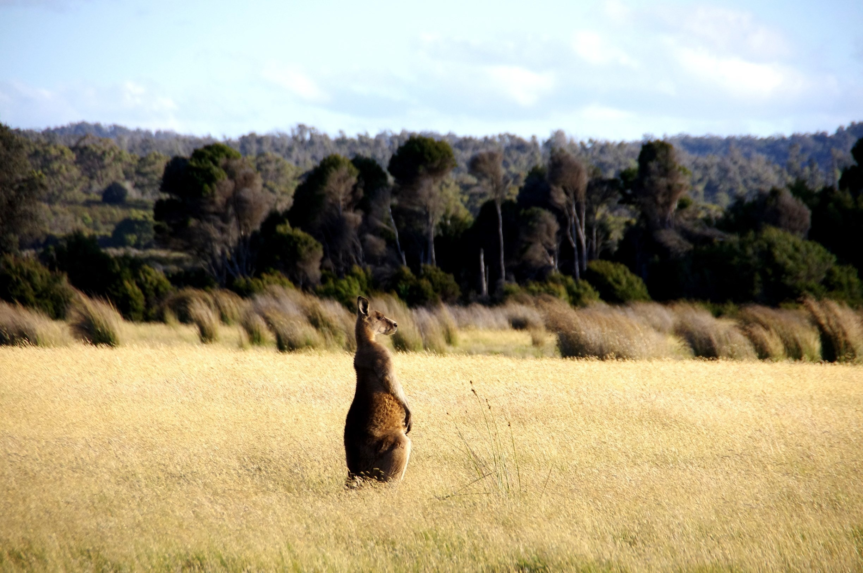 Narawntapu National Park, Bakers Beach, Tasmanië, Australië