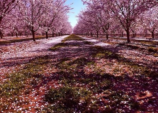 Shafter, Kalifornien, USA