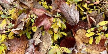 Enjoying the autumn colors.