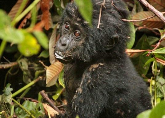 Mwenge, Uganda