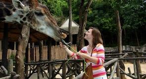Zoo von Chiang Mai
