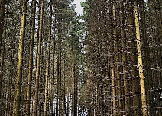 Bertogne, Belgie