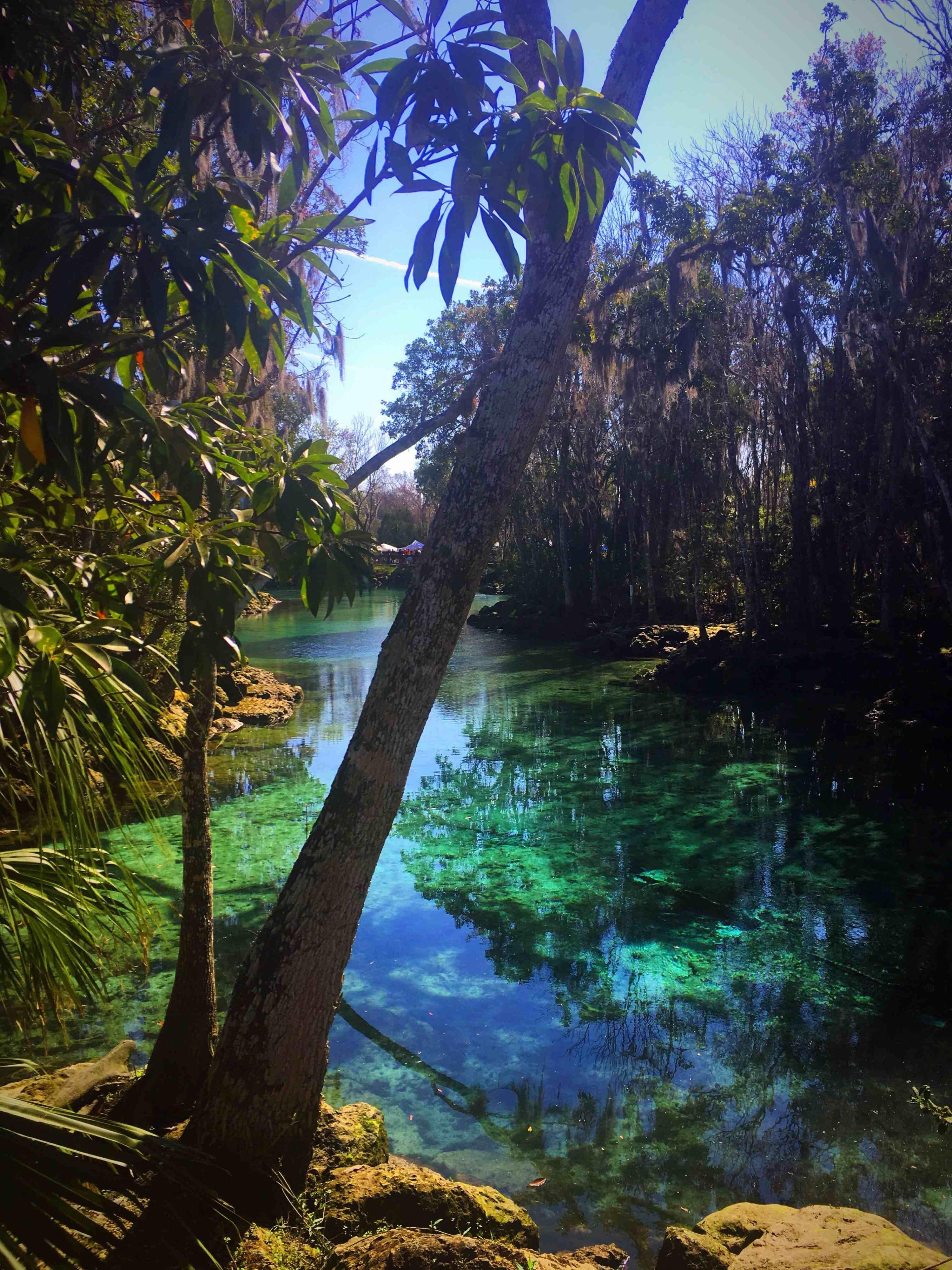 Springs at Kings Bay, Crystal River, Florida, USA