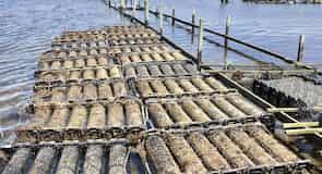 Granja marina de Freycinet
