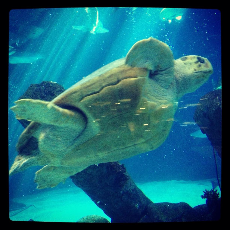 ABQ BioPark Aquarium, Albuquerque, New Mexico, Verenigde Staten