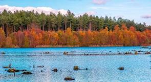 Hutan Delamere