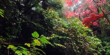 湯河原, 神奈川, 日本