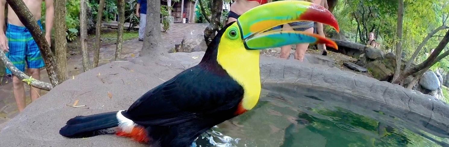 Гуаябо, Коста-Ріка