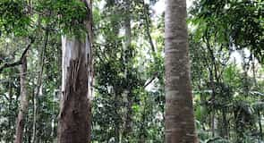 Tamborine National Park Joalah Section