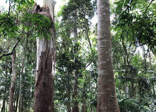 Tamborine Mountain, Queensland, Australie