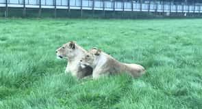 沃本野生動物園