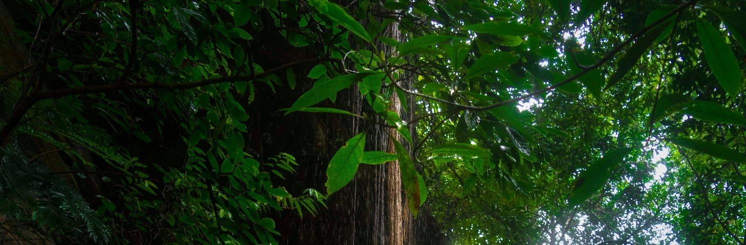 Agumbe, Indien