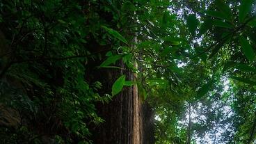 Agumbe/
