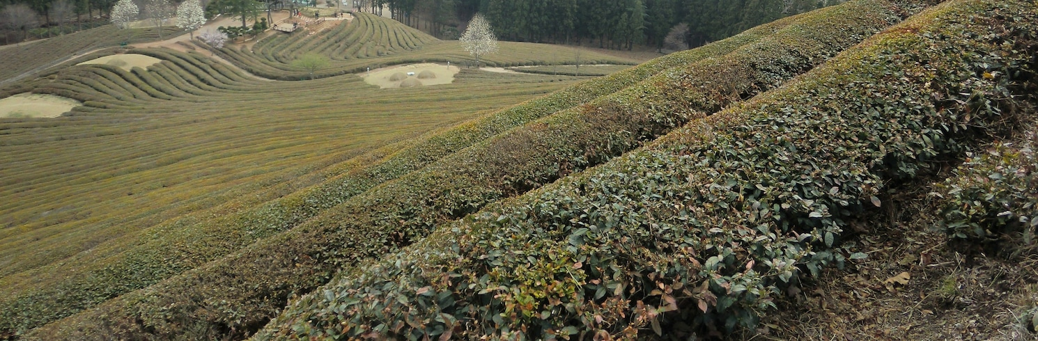 Boseong, Zuid-Korea