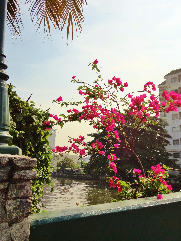 Phra Khanong, Bangkok, Bangkok Province, Thailand