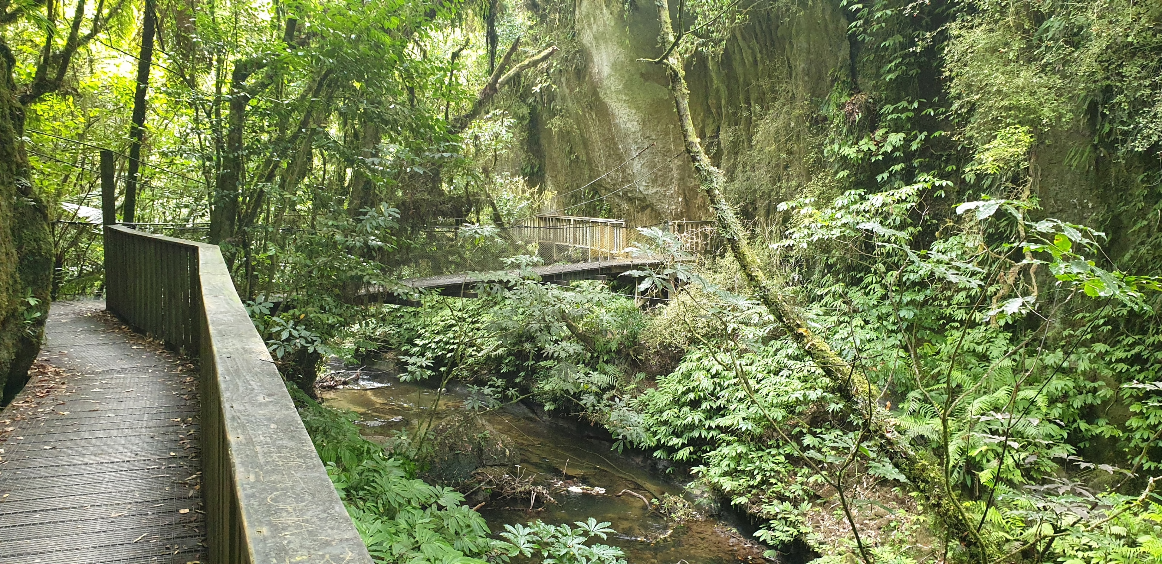 Te Anga, Waikato, New Zealand