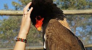 Moholoholo rehabiliteringssenter for ville dyr