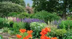 Ботанический сад в Акурейри