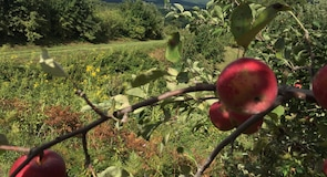 The Orchard at Altapass