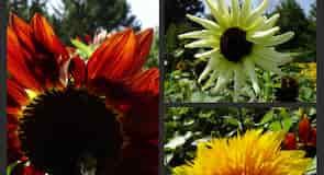 印斯伍德梅卓花園