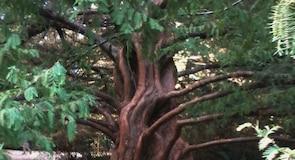 Austral University of Chile Botanical Garden