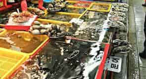 Dzsagalcsi halpiac