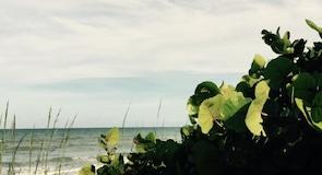 Seagull Park Plajı