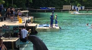 Dolphin Cove (χώρος εκπαίδευσης δελφινιών)