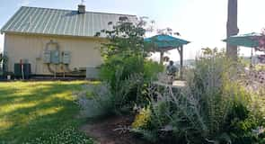 Honah Lee-vingården