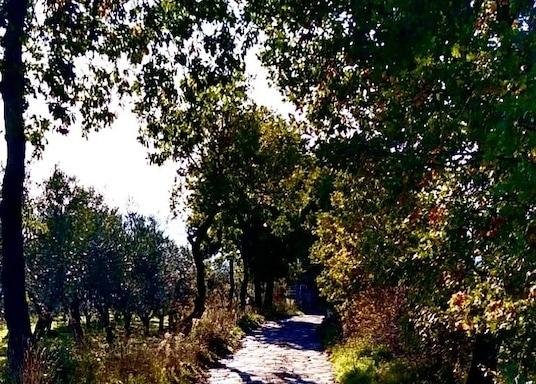 Vetralla, Itaalia