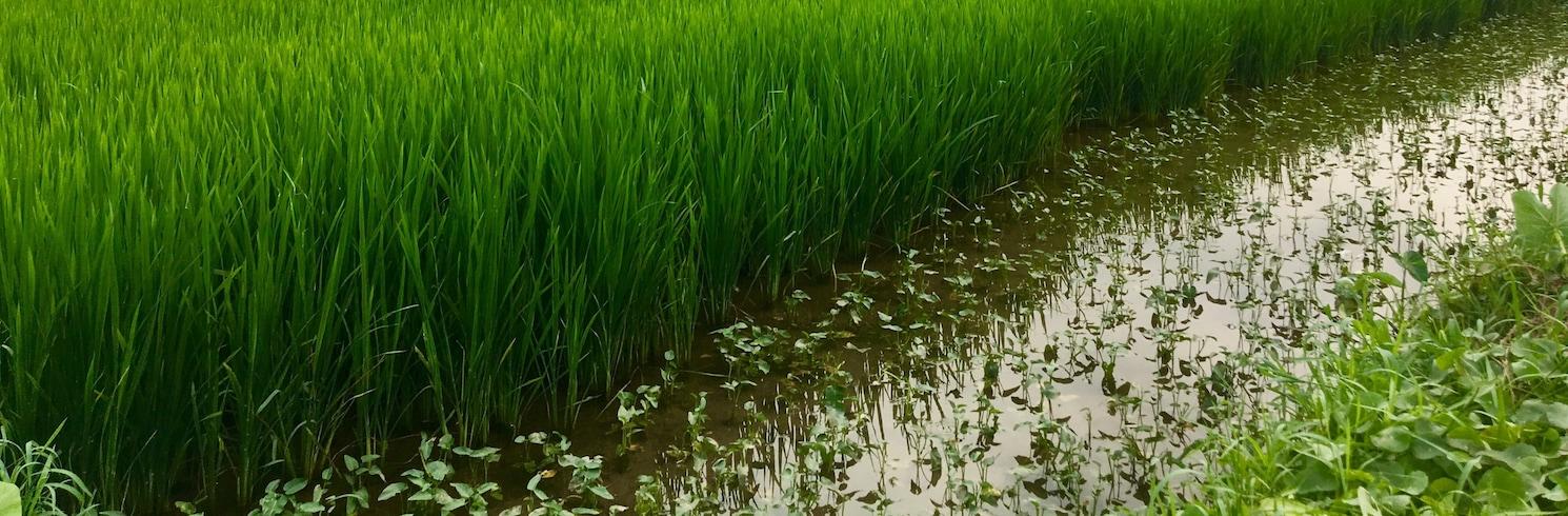 سون تيك, فيتنام