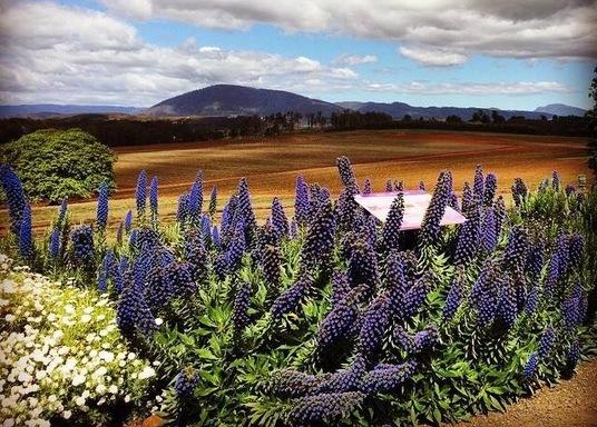 Nabowla, Tasmanija, Austrālija