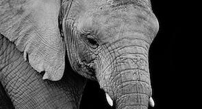 Africam Safari