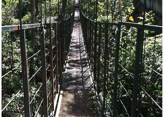 Patarra, Kosta Rika