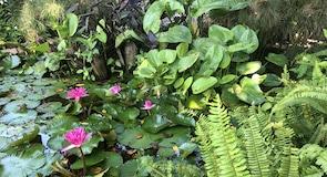 Everglades Wonder Gardens kertek
