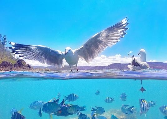 האי דיידרים, קווינסלנד, אוסטרליה