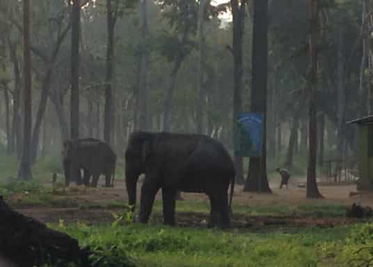 Virajpet, Ινδία