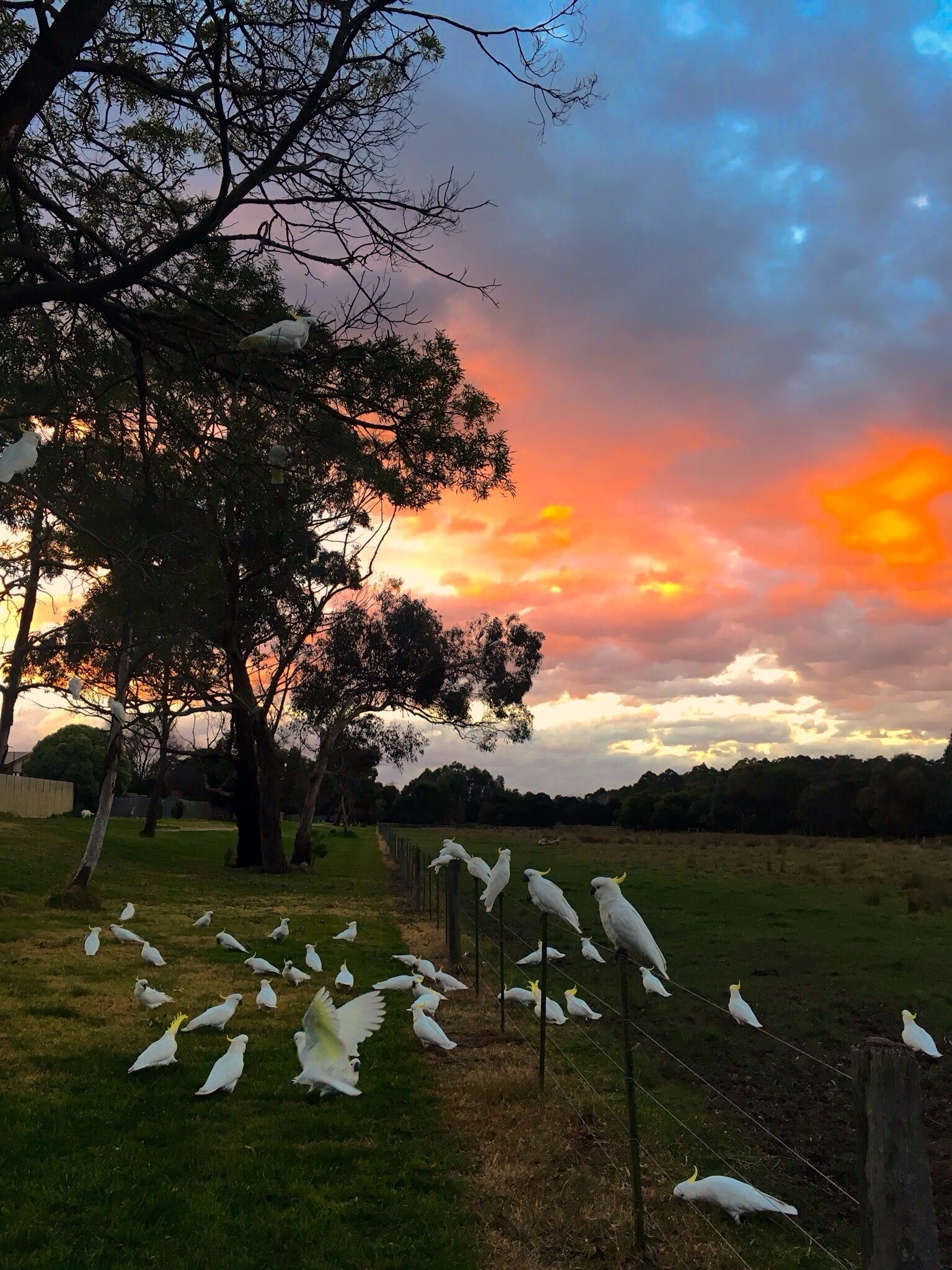 Glen Waverley, Melbourne, Victoria, Australia