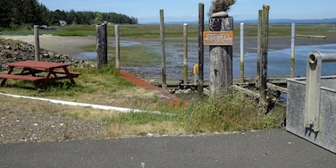Oyster beds in the background for as far as your eyes can see in Ocean Park, Washington.