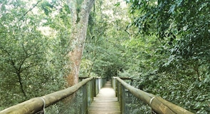 Dlinza Forest Aerial Boardwalk