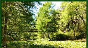 峽谷花園州立公園