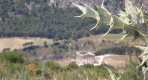 Yunan Segesta Tapınağı